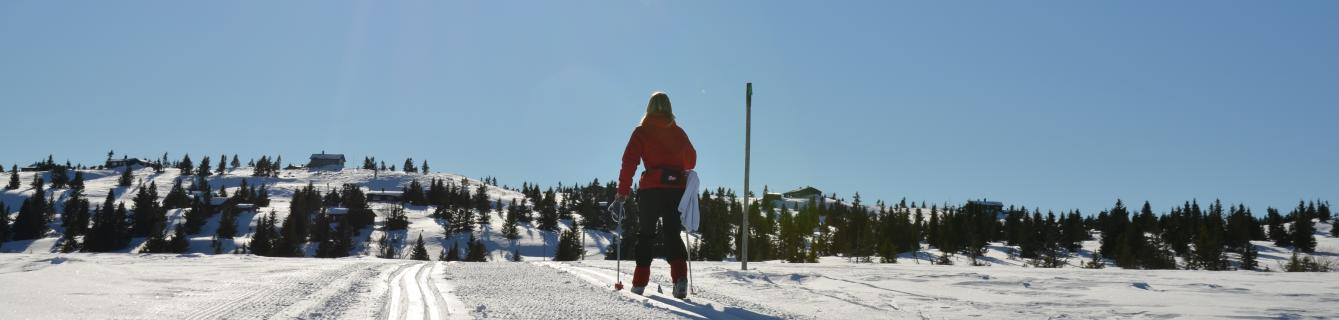 Vinter_skispor